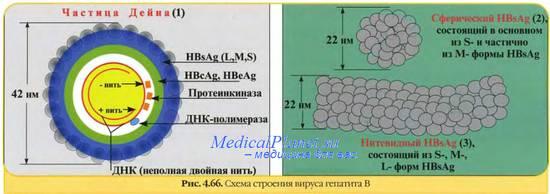 Вирусный гепатит в с тромбоцитопения