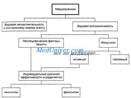 иммунитет