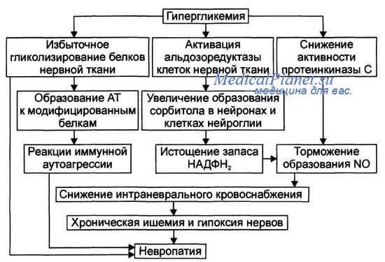 Патогенез диабетической нейропатии