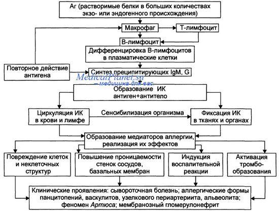 Иммупокомплексный тип повреждения тканей ( III тип аллергических реакций, феномен Артюса ). Аллергическая реакция замедленного типа ( IV тип ).