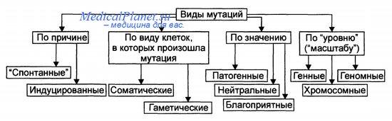 Классификация мутаций - их виды