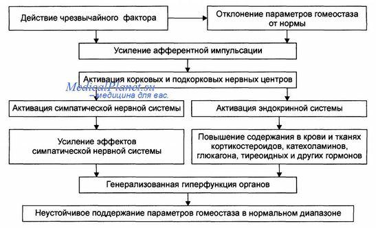 стресс, стадии стресса