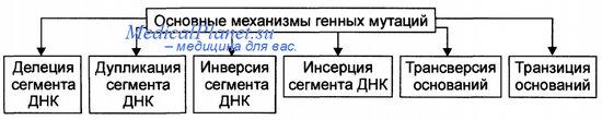 Виды и механизмы генных мутаций