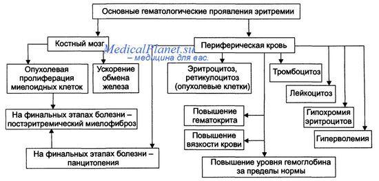 проявления эритремии - синдрома Хайльмейера-Шенера