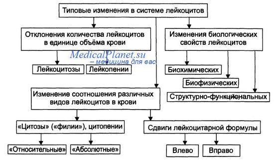Изменения в системе лейкоцитов