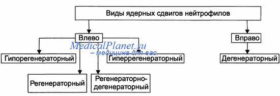 Варианты ядерных сдвигов нейтрофилов