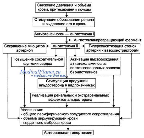 Причины артериальной гипертензии - этиология