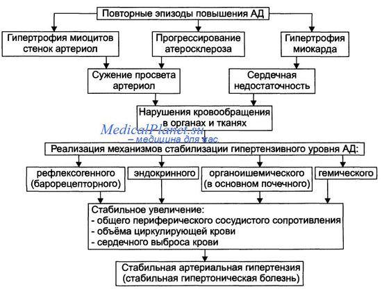 Лекция 50. Гипертоническая болезнь