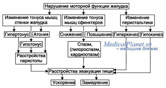 Патогенз нарушения моторной функции желудка при демпинг-синдроме