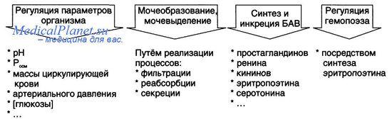 Механизмы нарушения прогенеза