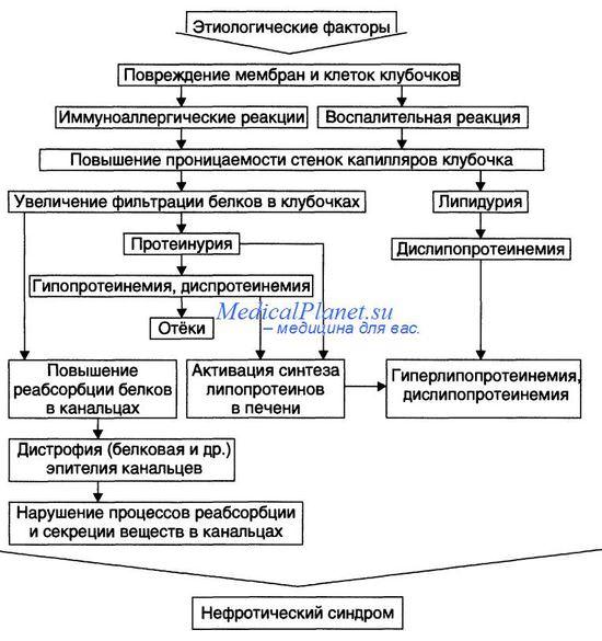 патогенез нефротического