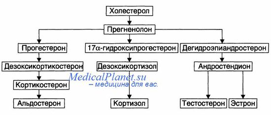 Синтез гормонов в коре надпочечников