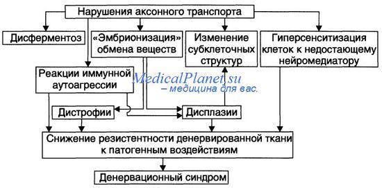 Типовые расстройства в постсинаптических структурах