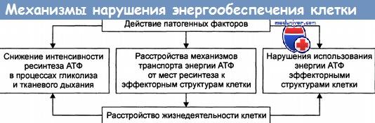 Механизмы нарушения энергообеспечения в клетке