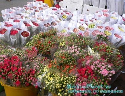 аллергия на цветы что делать