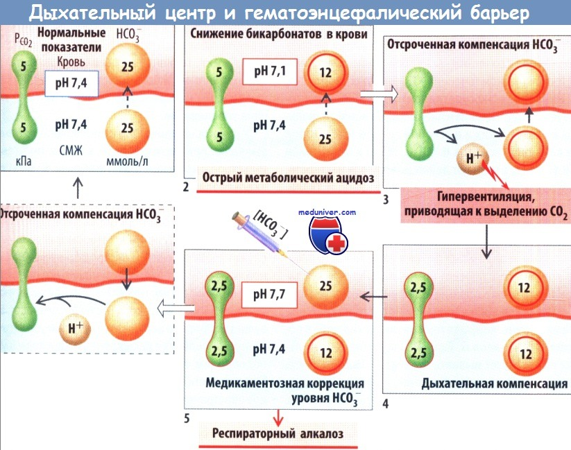 Дыхательный центр и гематоэнцефалический барьер