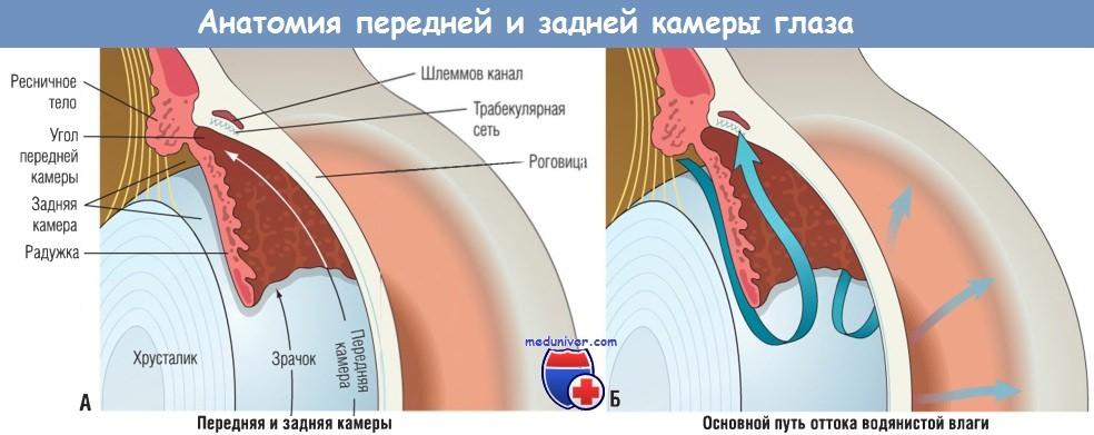 Анатомия передней и задней камеры глаза