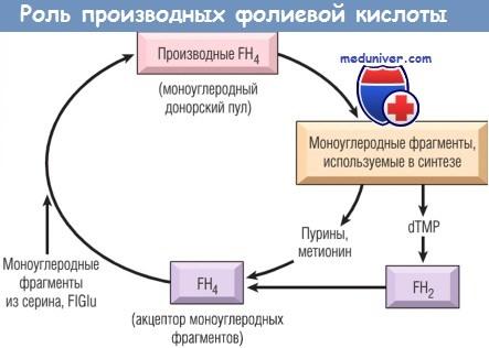 Роль производных фолиевой кислоты