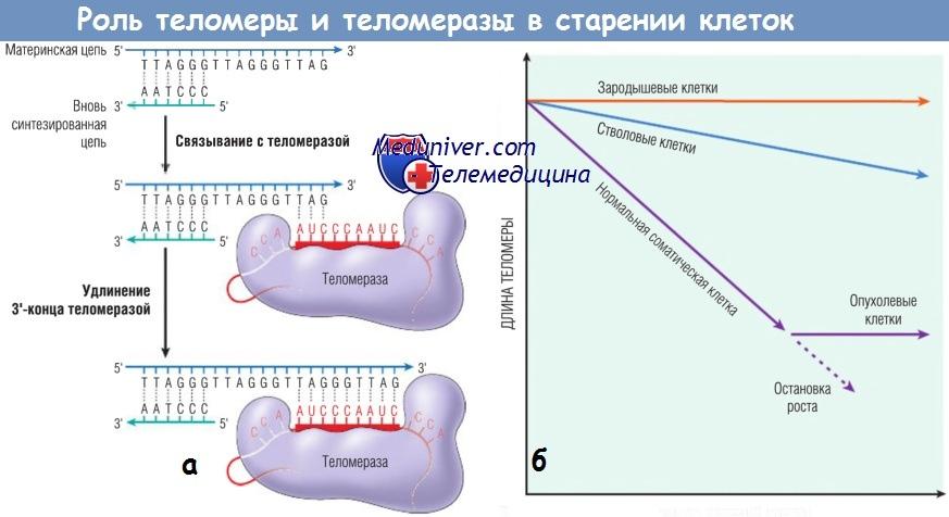 новые методы лечения диабета 2 типа