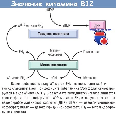 Значение витамина В12