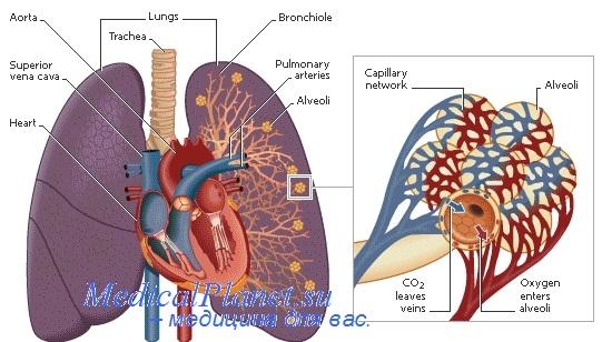 Регистрационное удостоверение для прибора для измерения артериального давления