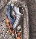 Грудная клетка. Анатомия грудной клетки.