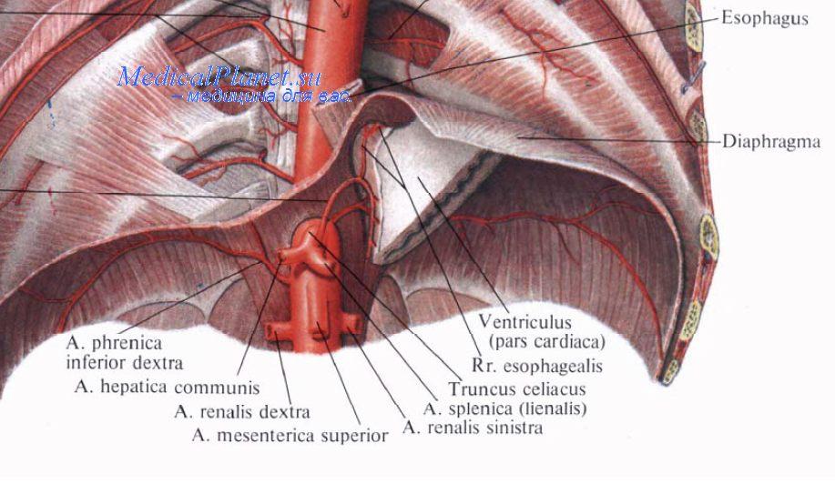 Самые читаемые статьи: Препараты при лечение варикоза