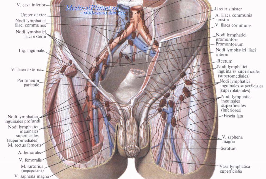 Увеличить грудь в какой клинике прайс лист