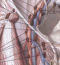 Анатомия кишечника для хирургов.