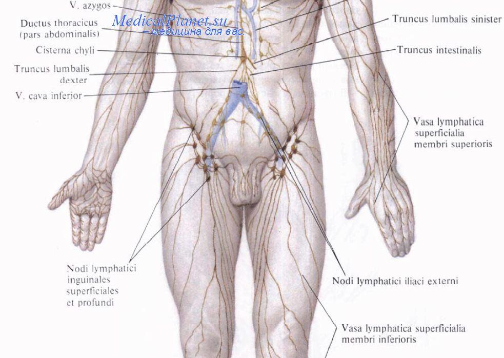 Лимфаденэктомия