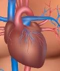 вопросы кардиологии