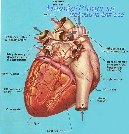 Причины врожденных пороков сердца ребенка.