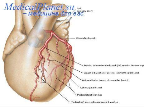 нервная система сердца