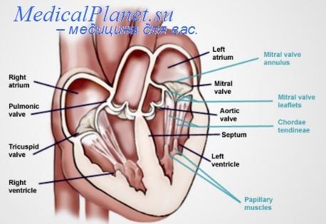 Оценка аортальной регургитации. Степени аортальной недостаточности