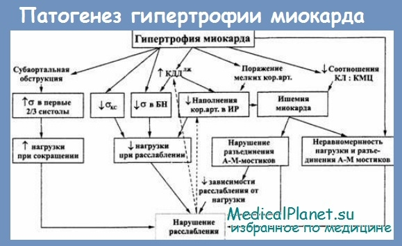 Варианты гипертрофии левого желудочка. Патогенез
