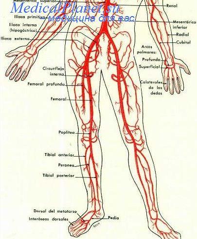 Функциональные пробы артерий. Стено-окклюзирующее поражение ...