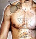 Онтогенез и генетика.