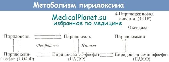 Метаболим пиридоксина