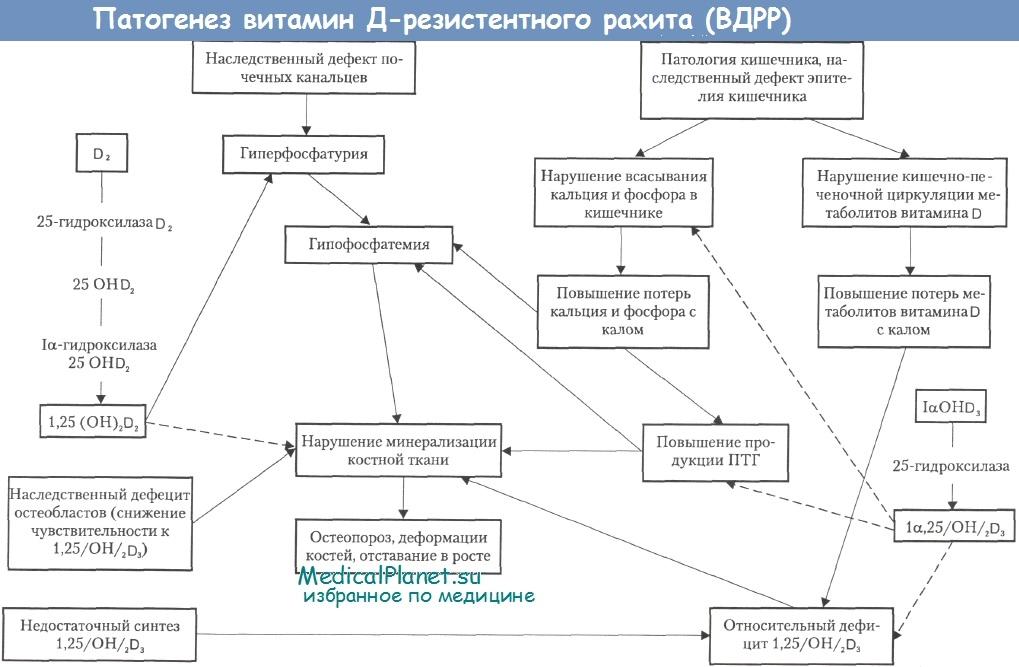 Патогенез витамин Д-резистентного рахита