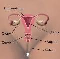 недостаточность яичников