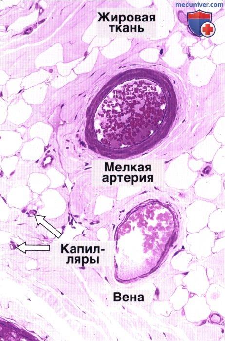 Arterioli