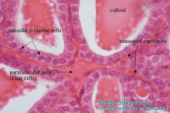 Биопсии