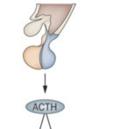 синтез гормонов