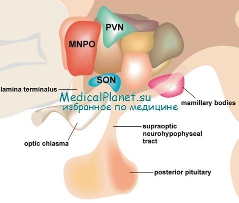 http://medicalplanet.su/gormonalnie_narushenia/Img/262.jpg
