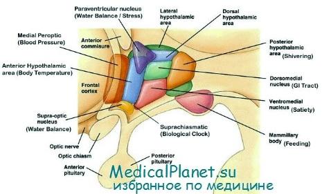 препараты группы статинов название