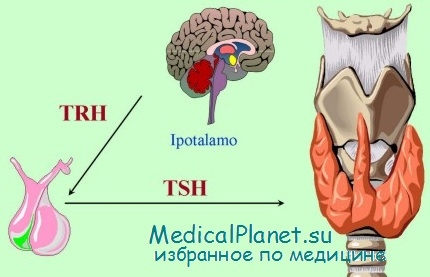 гормоны при гипотиреозе щитовидной железы