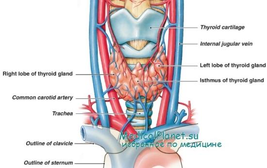 Что такое стенозирующий атеросклероз коронарных артерий