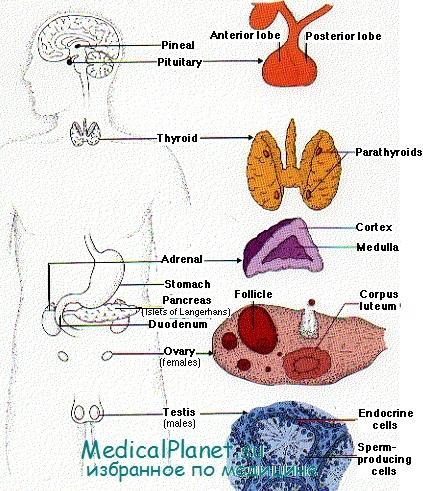 приема глюкокортикоидов