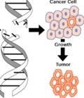 канцерогенез и иммунитет