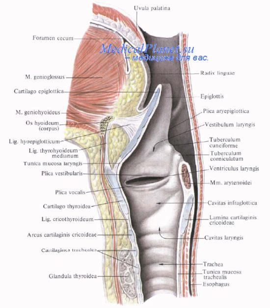 Анализ мочи предстательной железы